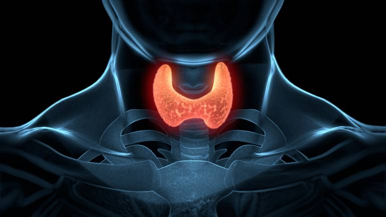 Understand Your Thyroid Tests