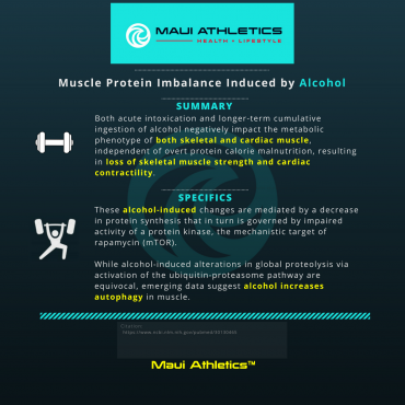 Alcohol and Muscle Protein Imbalance