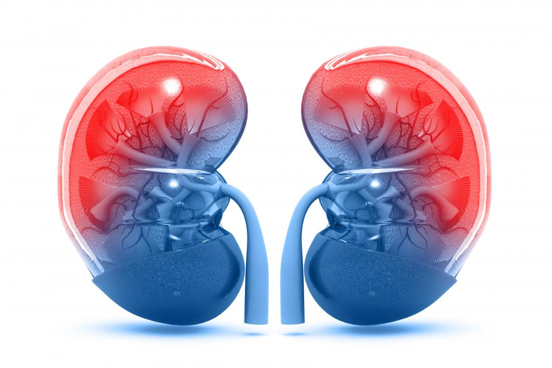 Creatine and Kidneys