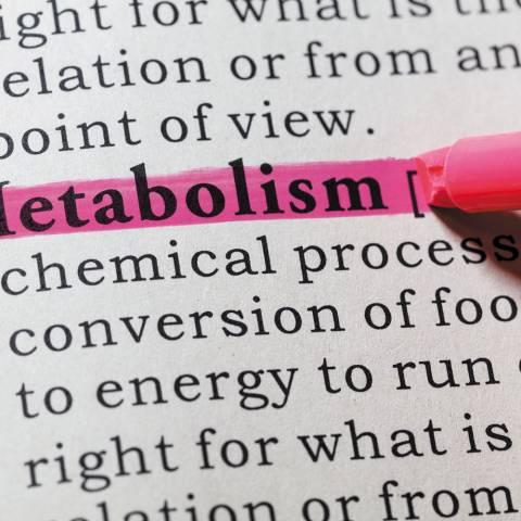 Metabolic Adaptation during Fat Loss